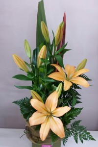 Bright Asiatic Lilies in a ceramic pot