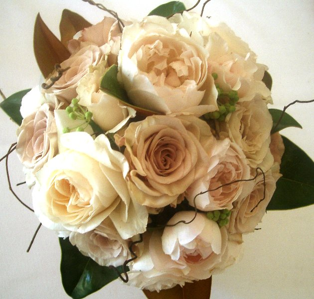 David austin roses and honeymoon roses