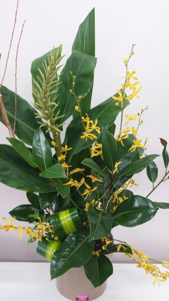 Golden orchids and ginger foliage