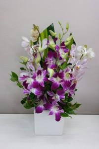 Singapore orchids arranged into a ceramic pot