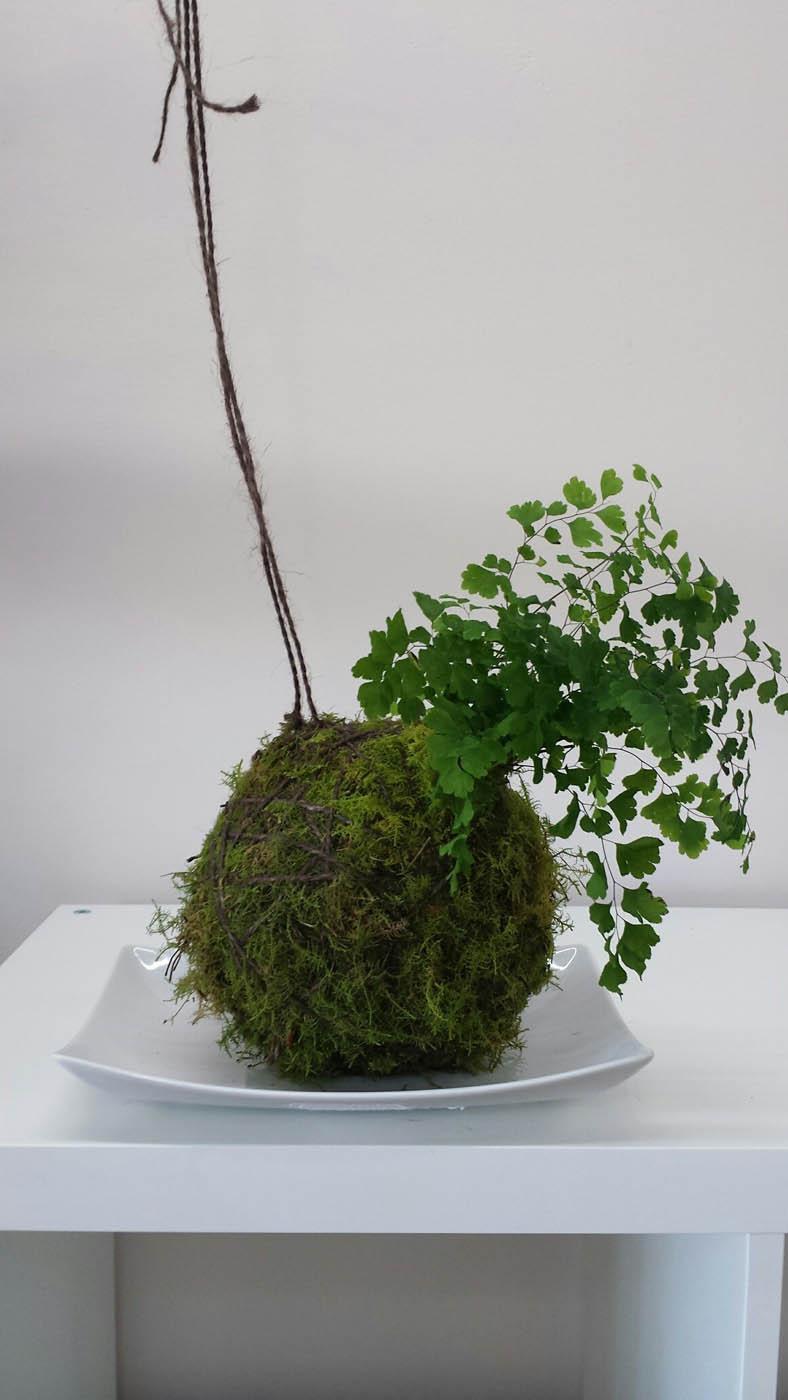 Maiden Hair fern Kokedama