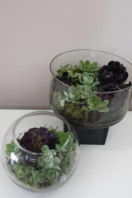 Succulent Fishbowl