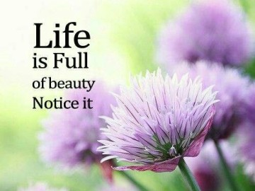 Life is full of beauty; notice it.