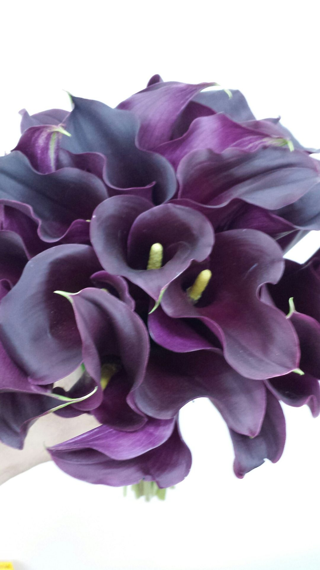 Compact bouquet of black Calla Lilies