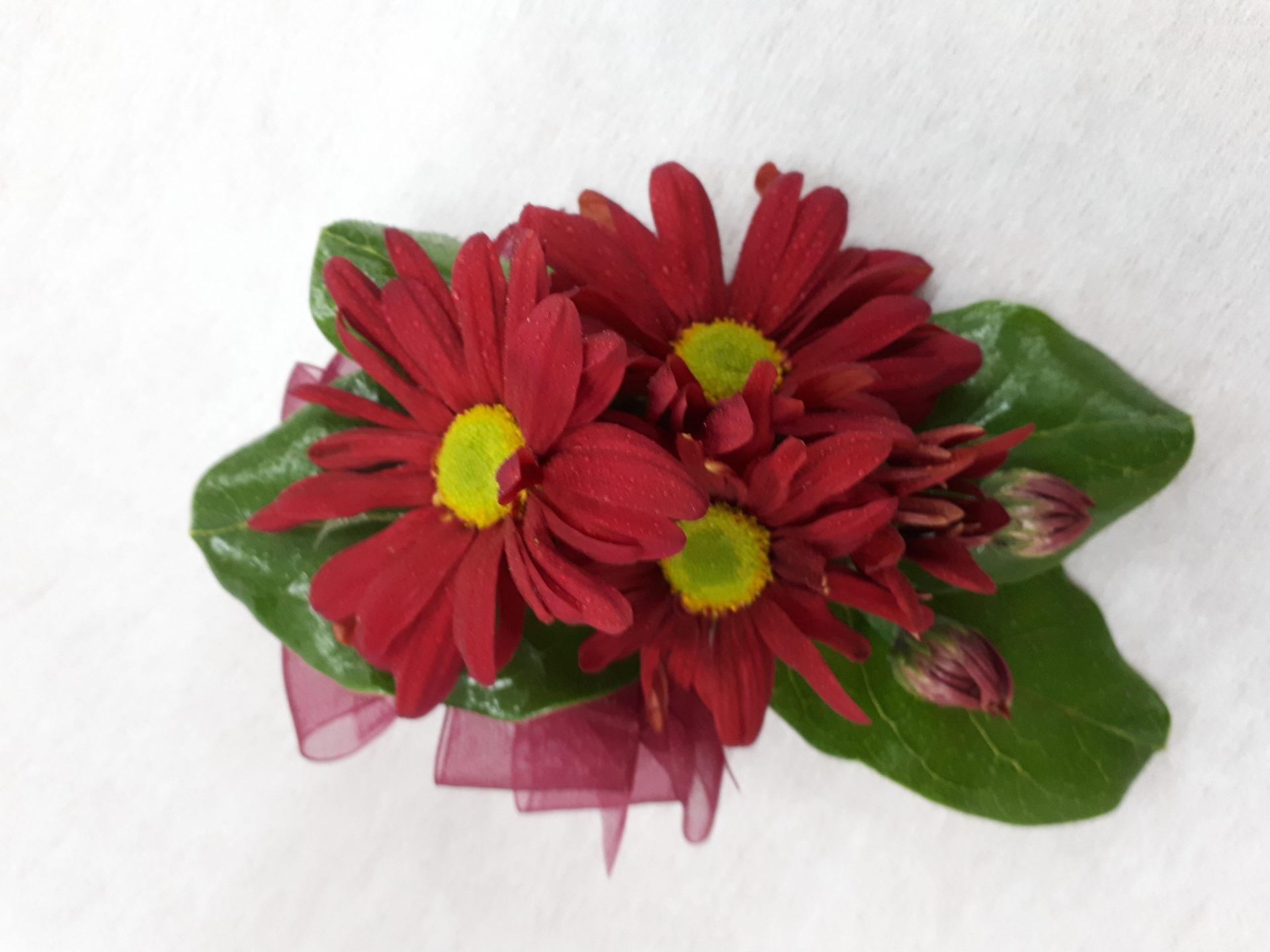 Burgundy daisy corsage