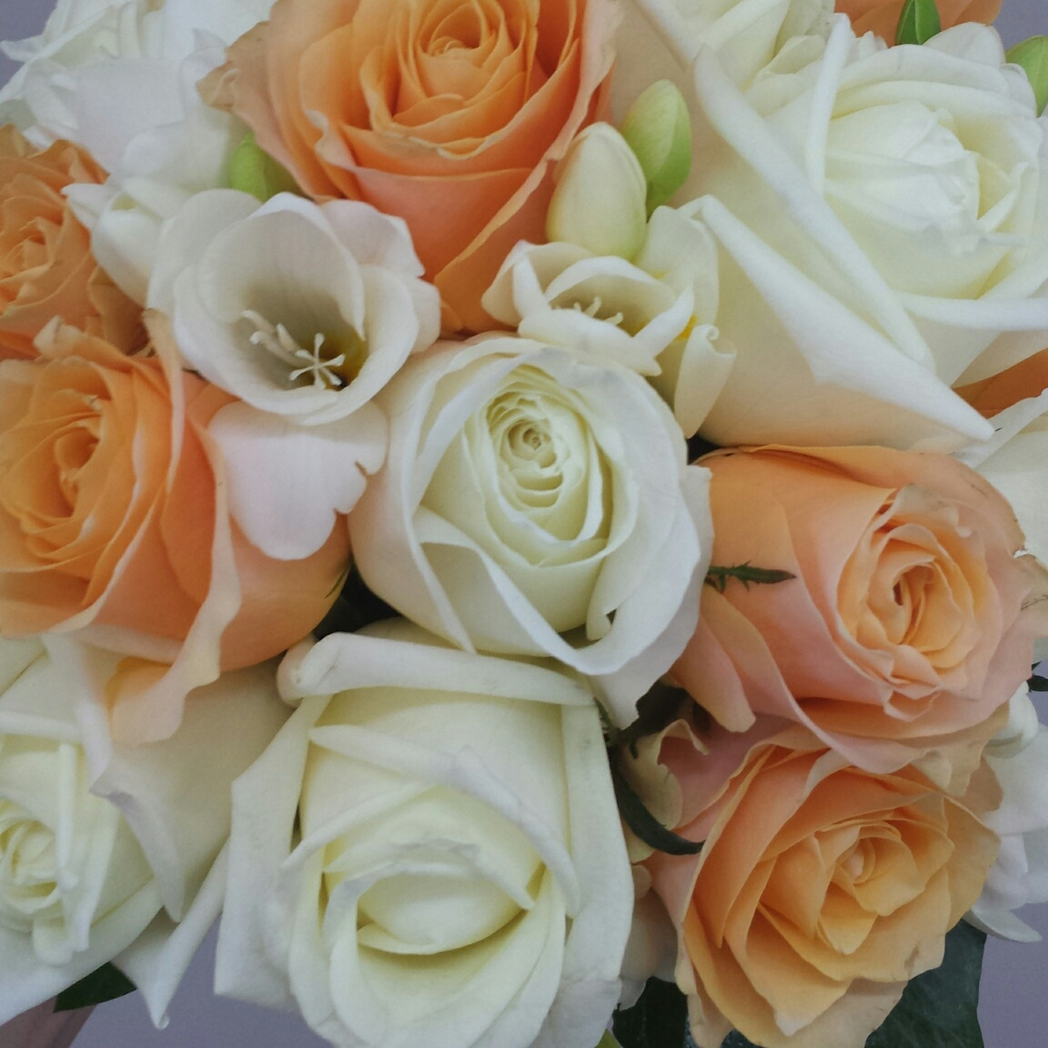 apricot and white roses with freesia