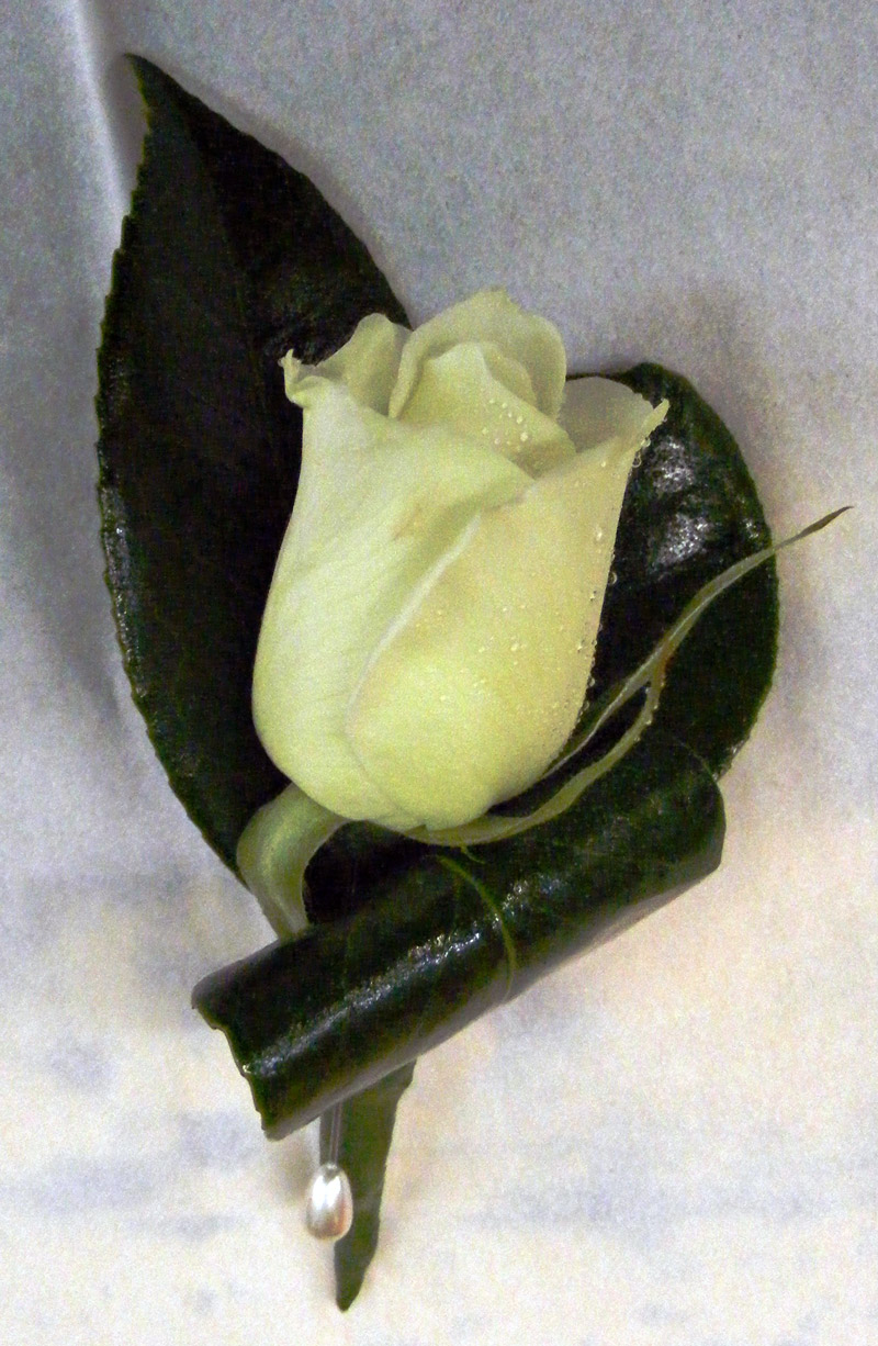 buttonhole white rose on Camillia leaves