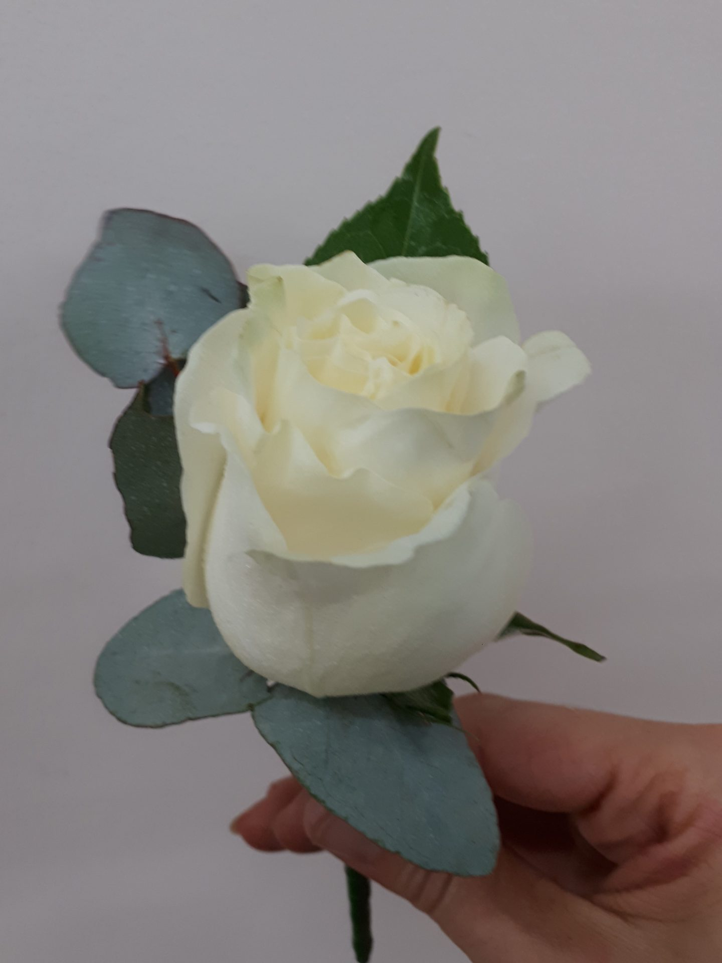 cream rose buttonhole