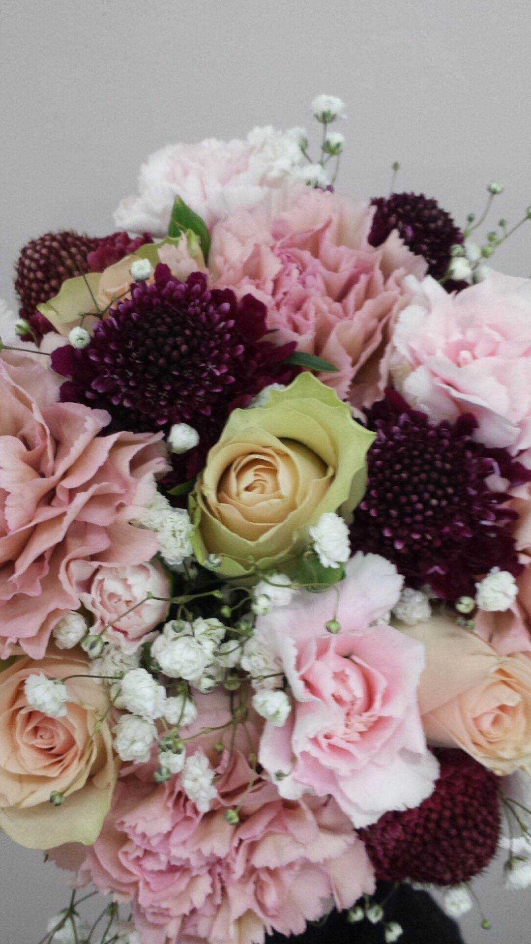 pastels with hint of magenta scabiosa flower