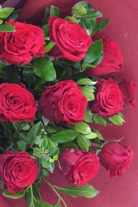 Dozen Roses Short Style