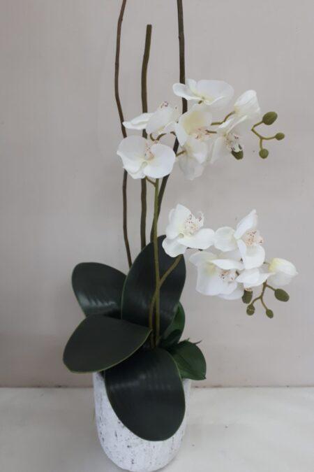 Tropical orchid pot