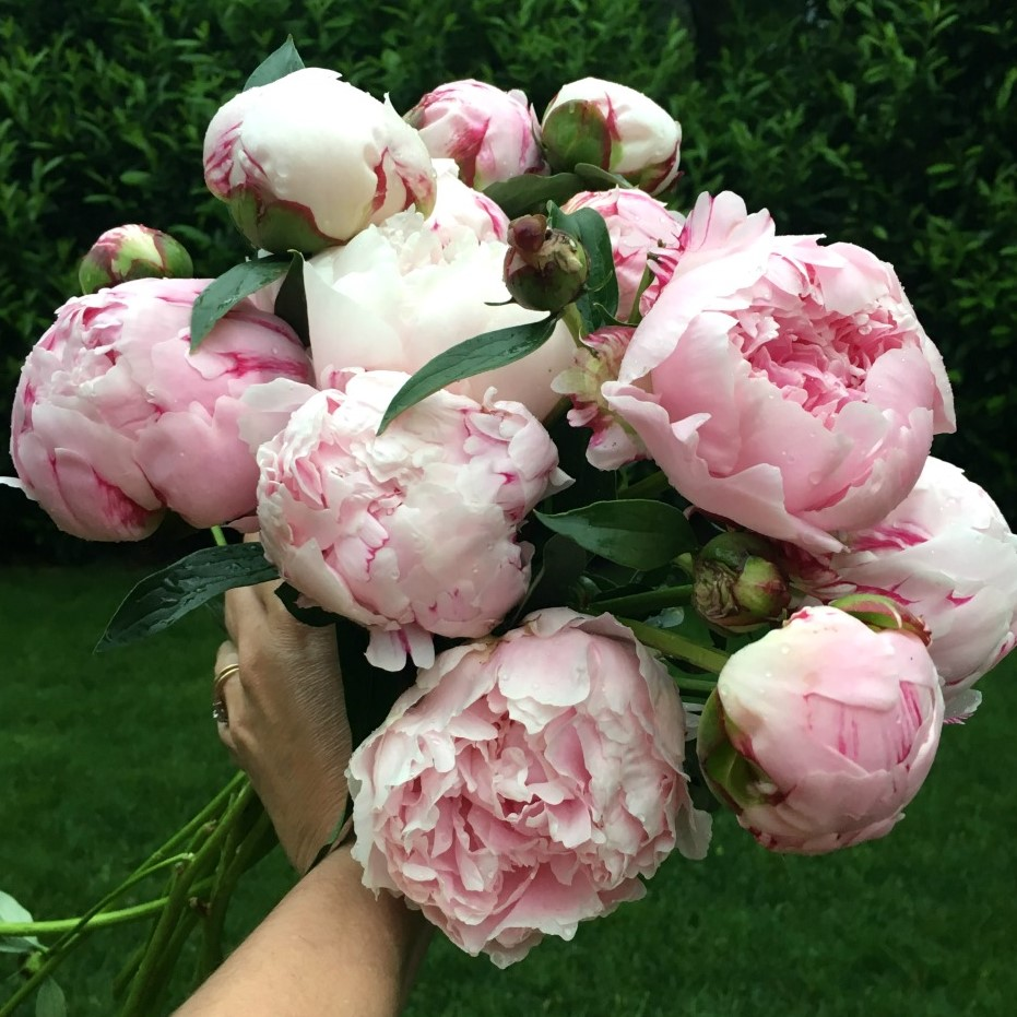 armload-pink-peonies