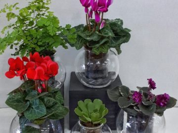 New self-watering Flora Pots