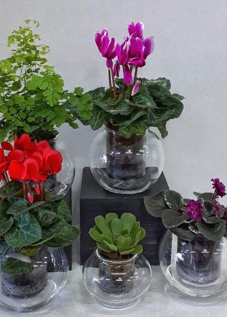 Flora Pots